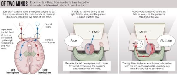 el interprete cerebral